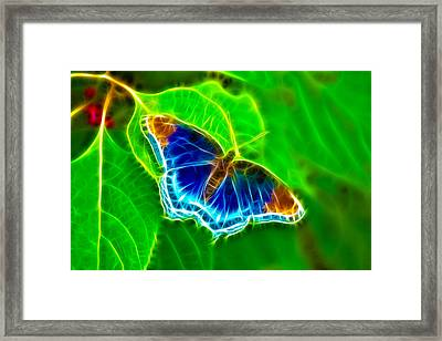 Fractal Butterfly Framed Print by Rich Leighton