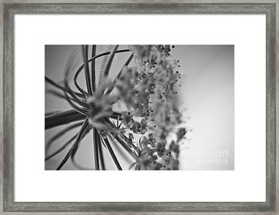Fractal Flower Photoset 03 Framed Print by Ryan Kelly