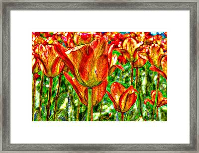 Fractured Tulips Framed Print by Jean-Marc Lacombe