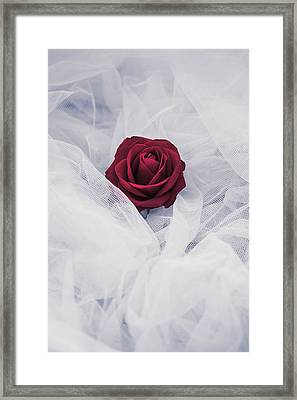 Fragile Framed Print by Art of Invi