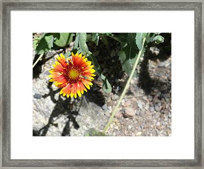 Fragile Floral Life On The Trail Framed Print