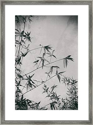 Framed Print featuring the photograph Fragility And Strength by Linda Lees