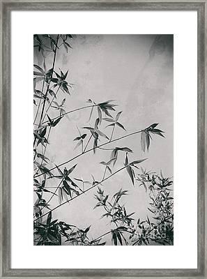 Fragility And Strength Framed Print