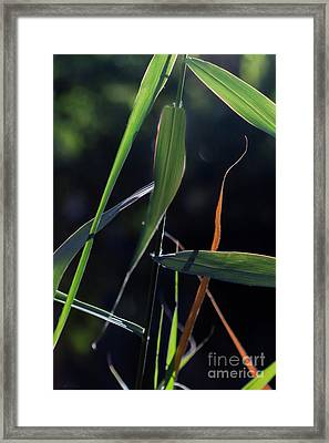 Framed Print featuring the photograph Fragment by Linda Lees