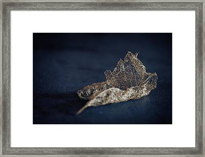 Framed Print featuring the photograph Fragment by Tim Nichols
