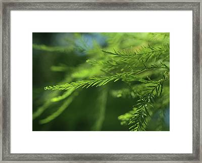 Framed Print featuring the photograph Fragments Of Time  by Connie Handscomb
