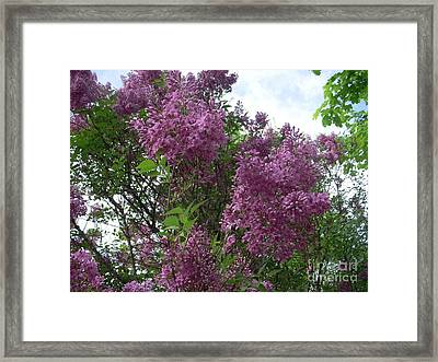 Fragrance Fills The Air Framed Print by Deborah Finley