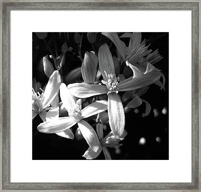 Fragrance Framed Print