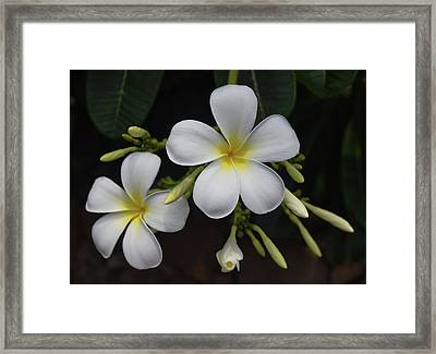 Framed Print featuring the photograph Fragrance Of Hawaii by Pamela Walton