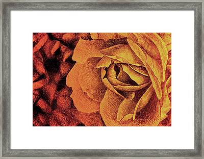 Fragrant Rose, Colorful Drawing With Delicate Rose Petals Framed Print by Oana Unciuleanu