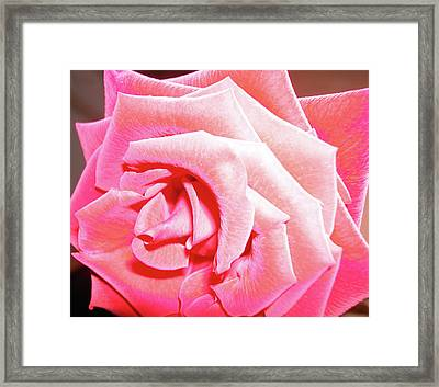 Framed Print featuring the photograph Fragrant Rose by Marie Hicks