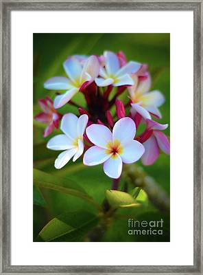 Framed Print featuring the photograph Fragrant Sunset by Kelly Wade