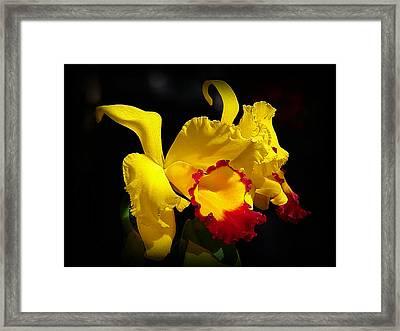 Fragrant Sunshine Framed Print by Blair Wainman