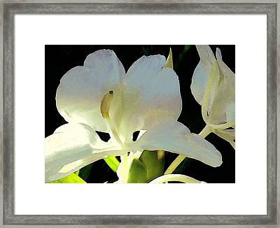 Fragrant White Ginger Framed Print by James Temple