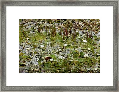 Fragrant White Framed Print by Susan Cole Kelly