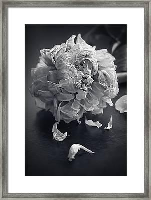 Frail Goodbye Framed Print by Maggie Terlecki