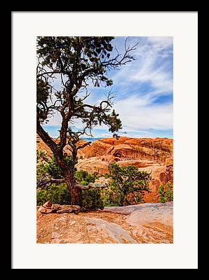 Arches National Park Pine Trees Framed Prints
