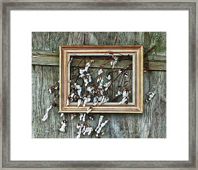 Framed Cotton Framed Print by Michael Thomas