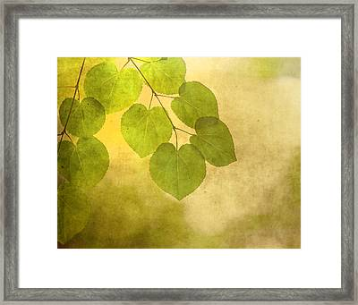 Framed In Light Framed Print
