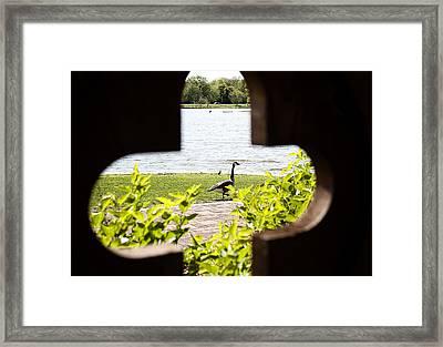 Framed Nature Framed Print
