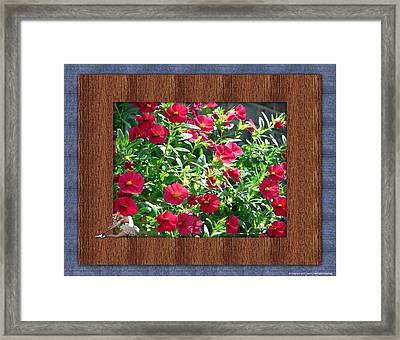 Framed Petunias Framed Print by Morning Dew