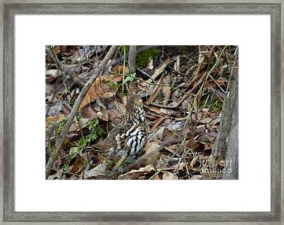 Framed Print featuring the photograph Framed Rugr by Randy Bodkins