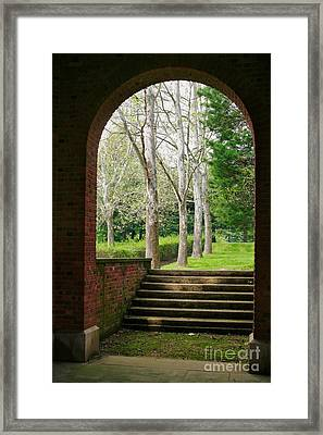 Framed Sycamores Framed Print by Susan Isakson