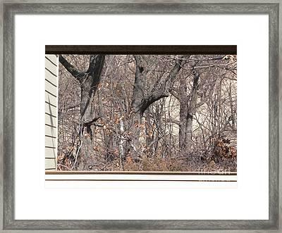 Framing Tangled Dunescape Framed Print by Ann Horn