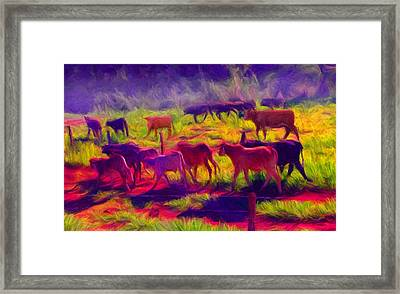 Franca Cattle 1 Framed Print