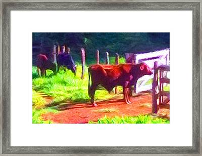 Franca Cattle 2 Framed Print by Caito Junqueira