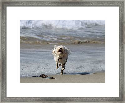 Francis Frockling In The Surf Framed Print
