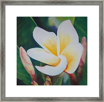 Frangipani After Rain Framed Print by Loueen Morrison