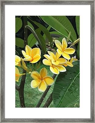 Frangipani Framed Print by Plum Ovelgonne