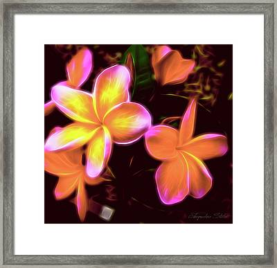 Frangipanis On The Glow Framed Print