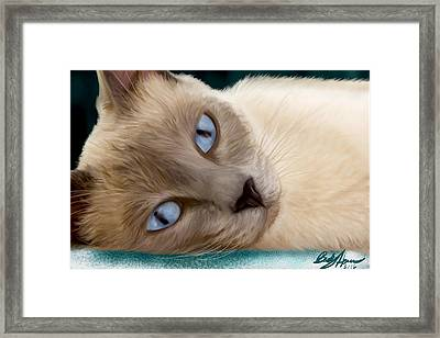 Frankie Blue Eyes Framed Print
