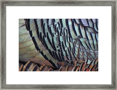 Framed Print featuring the photograph Franklin's Choice by Tony Beck