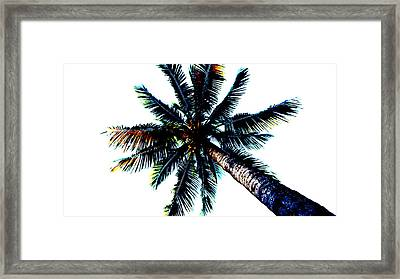 Frazzled Palm Tree Framed Print