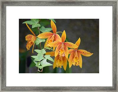 Framed Print featuring the photograph Freckled Flora by Deborah  Crew-Johnson