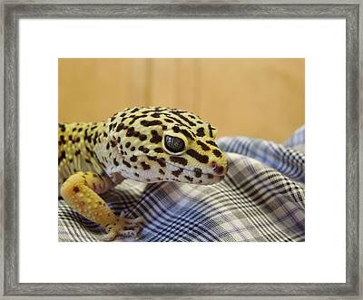 Freckles The Leopard Spotted Gecko Framed Print