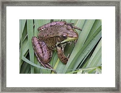 Fred Framed Print by Robert Joseph