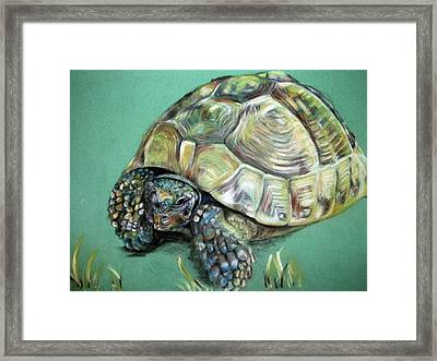 Fred Framed Print by Tanya Patey