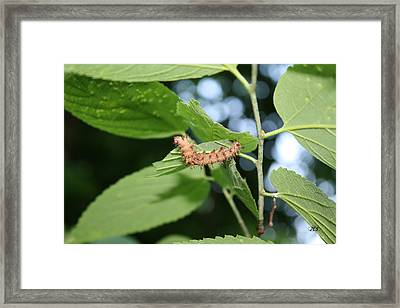 Fred The Worm Framed Print by Jim Simms