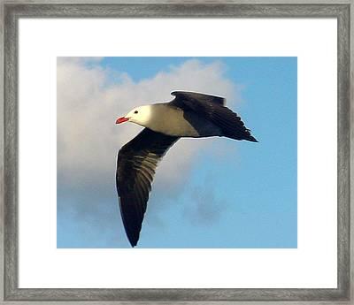 Free Flight Framed Print by PJ  Cloud