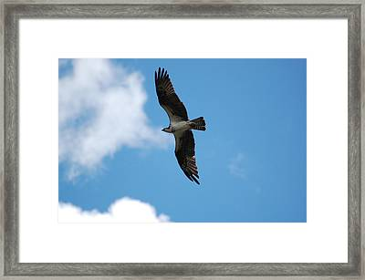 Free Flying Framed Print by Joyce Huhra