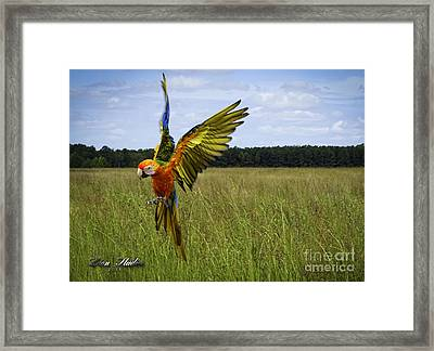 Free Flying Framed Print