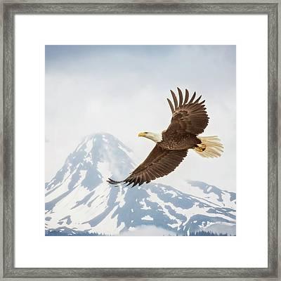Free Flying Framed Print