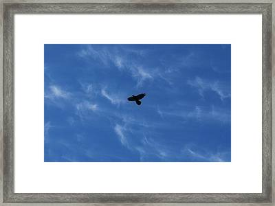 Framed Print featuring the photograph Free by Marilynne Bull