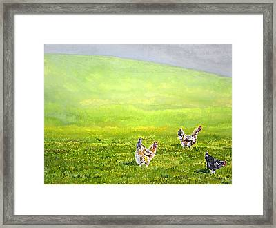 Free Range Chickens Framed Print by Francis Robson