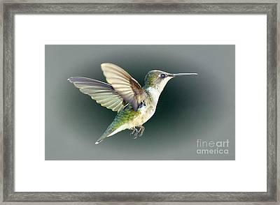 Free Spirit Framed Print by Arnie Goldstein