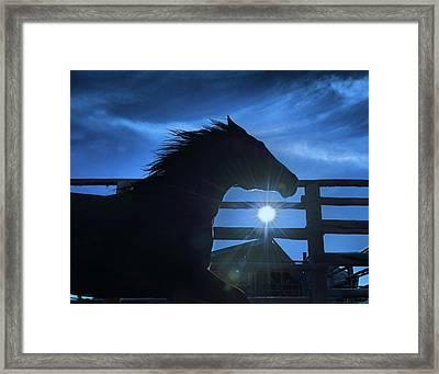 Free Spirit Horse Framed Print
